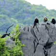 Parc national de Cat Ba