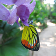 La ferme aux Papillons