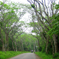 Parc naturel de Cuc Phuong