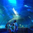 Le musée océanographique