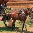Promenade en calèche à cheval