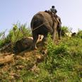 Le camp des éléphants de Taungoo
