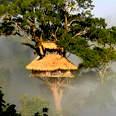 La réserve naturelle de Bokéo