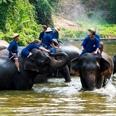 Le centre de conservation des éléphants