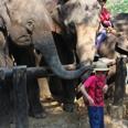 Le camp des éléphants
