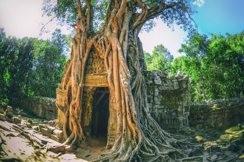 kampong thom, cambodge, voyage cambodge, asiatica travel, paysage, temple, arbre