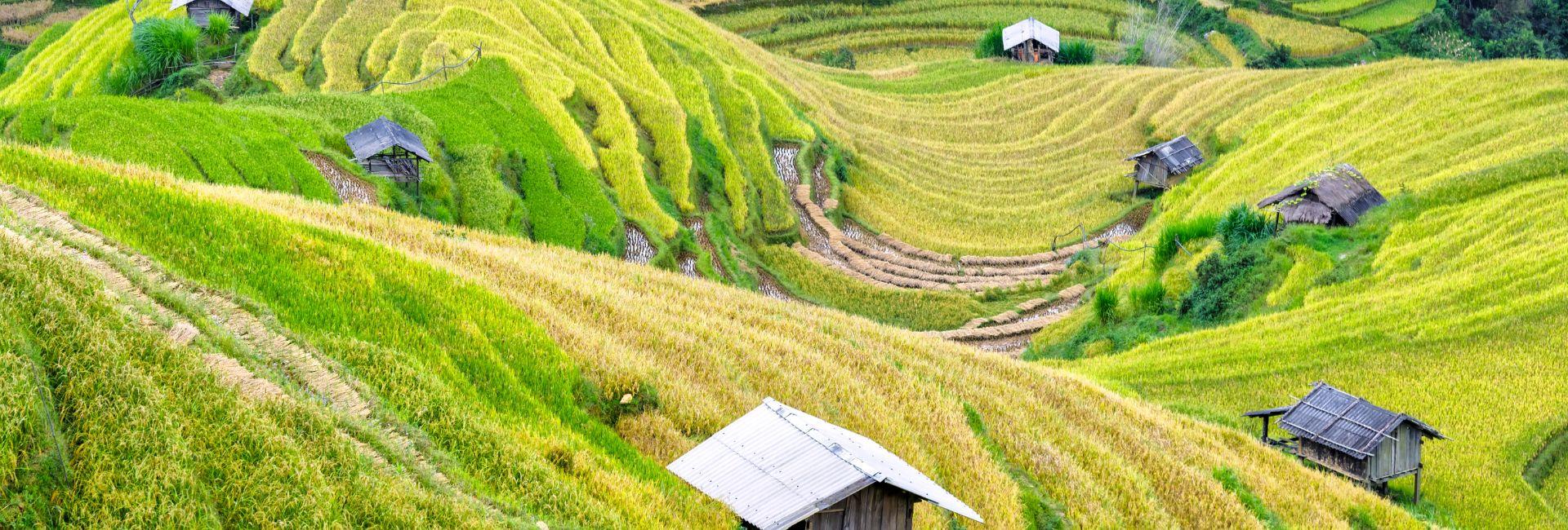 Trek entre splendide rizière en terrasse au Nord