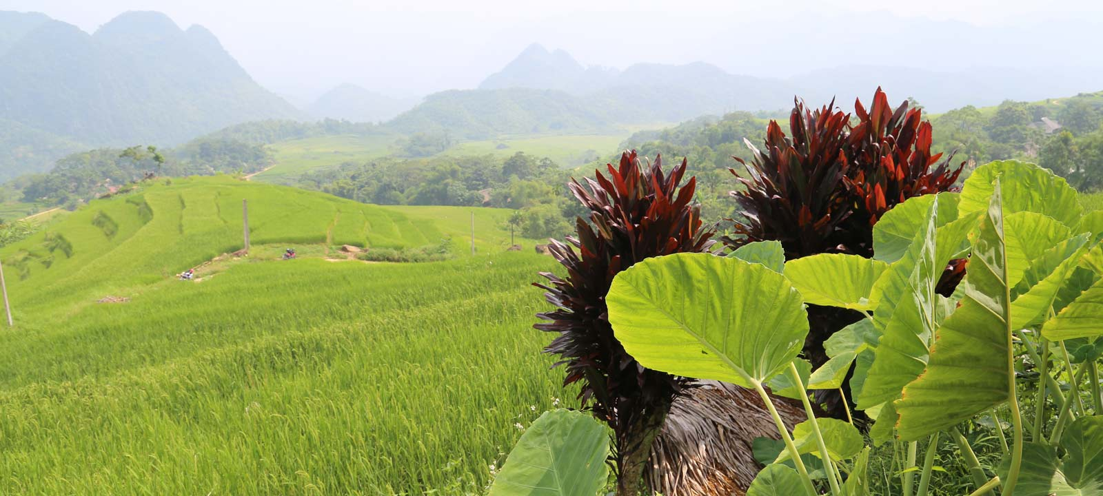 Réserve naturelle de Pu Luong