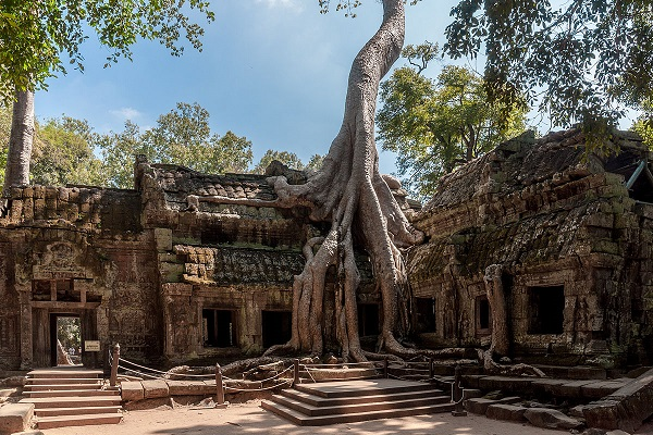 Ta Prohm, un temple à l'état naturel d'Angkor